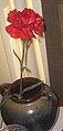 Red carnation08021401.jpg