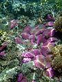 Reef1203 - Flickr - NOAA Photo Library.jpg