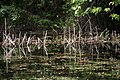 Reflected Reeds, Alternate Take (3680658645).jpg