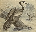 Reptiles and birds. A popular account of the various orders; with a description of the habits and economy of the most interesting. (1873) (14747277754).jpg