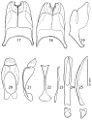 Revision-of-the-genus-Hemisaprinus-Kryzhanovskij-1976-(Coleoptera-Histeridae-Saprininae)-zookeys-429-101-g010.jpg
