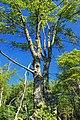Reynolds Spring Natural Area (7) (28861303013).jpg