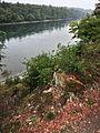 Rheinau - Strickboden, Köpferplatz, Teil der spätrömischen Rheinbefestigung 2011-09-29 13-22-36.JPG