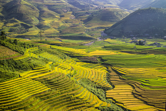 Integrated geography - Rice terraces located in Mù Cang Chải district, Yên Bái province, Vietnam
