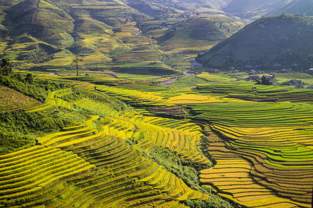 Rice terraces located in Mu Cang Chai district, Yen Bai province, Vietnam Rice terrace.png