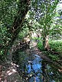 River Ching footpath 13, river bank trees, South Chingford, London, England.jpg