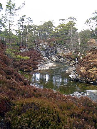 Flora of Scotland - Typical upland scenery with Scots Pine (Pinus sylvestris), Silver Birch (Betula pendula) and Heather (Calluna vulgaris)