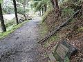 River walk warburton.JPG