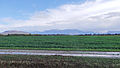 Rives - Plaine de Bievre - 20131103 125725.jpg