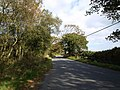 Road to Hollycombe Cross - geograph.org.uk - 1553120.jpg