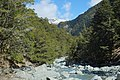 Rob Roy Stream through beech forest towards Matukituki Valley.jpg