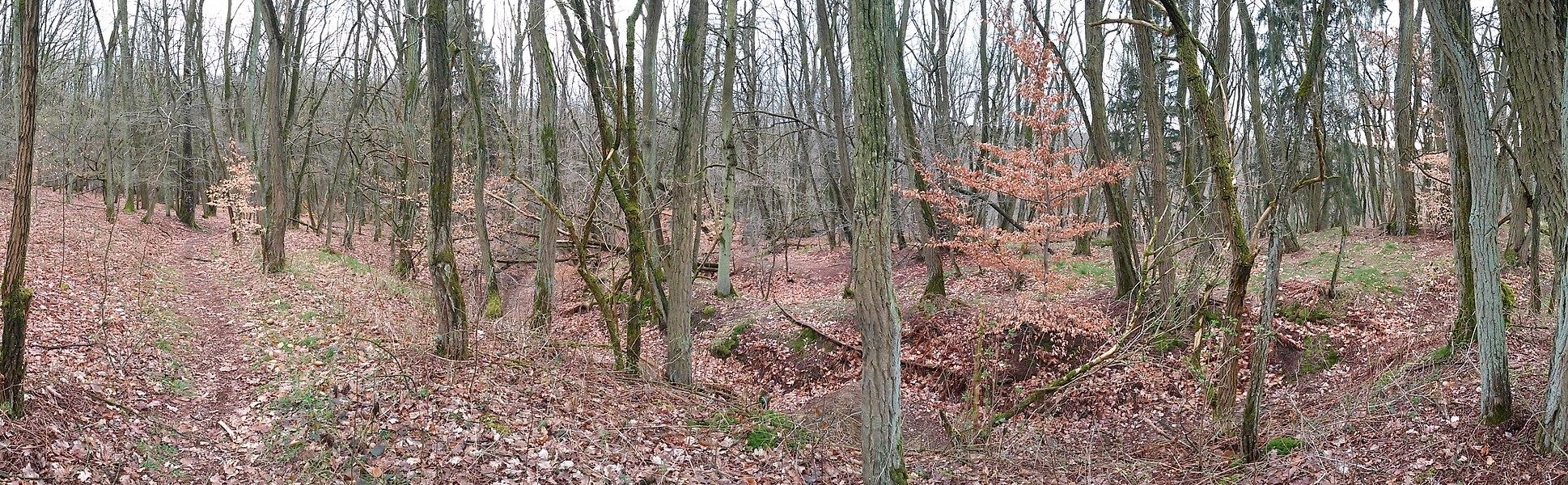 Robinienwald an der Landesgrenze