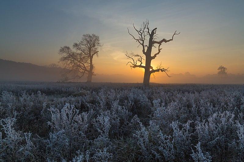 File:Rogaliński Park Krajobrazowy o świcie.jpg