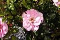 Rosa Baby Blanket 5zz.jpg
