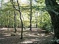 Rushey Plain - panoramio.jpg