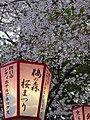 Sakura of Unomori park , 鵜の森公園の桜 - panoramio (3).jpg