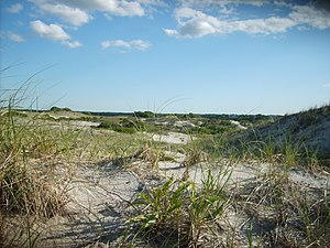 Cape Cod - The dunes on Sandy Neck are part of the barrier beach that helps prevent coastal erosion.
