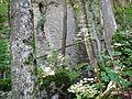 Schwäbische Alb - panoramio (8).jpg