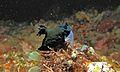 Sea Slug (Tambja morosa) (6082630128).jpg