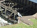 Seagull Next To Weir - geograph.org.uk - 761272.jpg