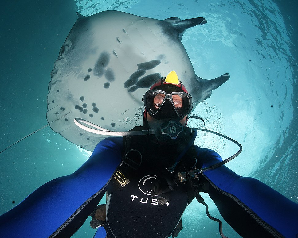 Selfie with Giant Manta, Bali