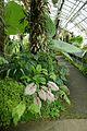 Serre tropicale-Jardin des plantes de Nantes.jpg