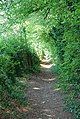 Shaded bridleway to Charlton Marshall - geograph.org.uk - 424202.jpg