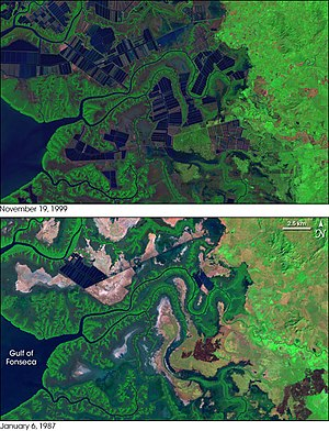 Mangrove tree distribution -  Shrimp farming development in Honduras. Lower image is before devopment in 1987, upeer image is following expansion of ponds in 1999