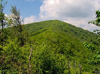 Silers Bald - The summit of Silers Bald, looking west from the Narrows.