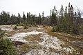 Silty soil outside of Pedro Bay (ec313871-9c40-4637-b6a4-fa847db144c4).jpg