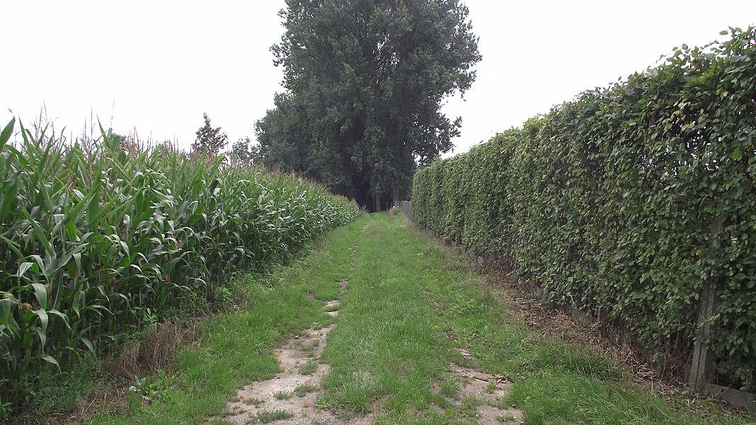 De oude buurtspoorwegroute tussen Geraardsbergen en Gent. Hier nu een veldweg.