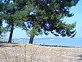 Skala Prinos beach - panoramio.jpg