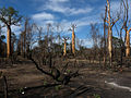 Slash and Burn Agriculture, Morondava, Madagascar.jpg