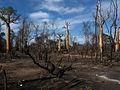 Slash and Burn Agriculture, Morondava, Madagascar.jpg