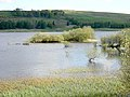 Small Island in Carron Valley Reservoir - geograph.org.uk - 170271.jpg