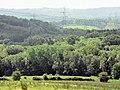 Snathurst Wood - geograph.org.uk - 451255.jpg