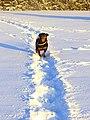 Snow - panoramio (57).jpg