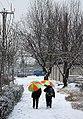 Snow in Mashhad - 17 December 2012 14.jpg