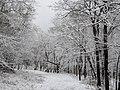 Snowy morning at Port Louisa National Wildlife Refuge (15697729950).jpg