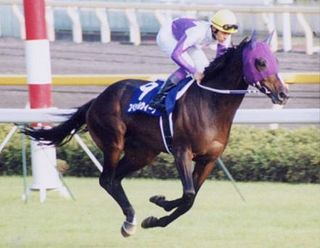 Special Week Japanese-bred Thoroughbred racehorse