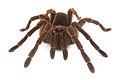 Spider18.jpg