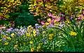 Spring (9053938667).jpg