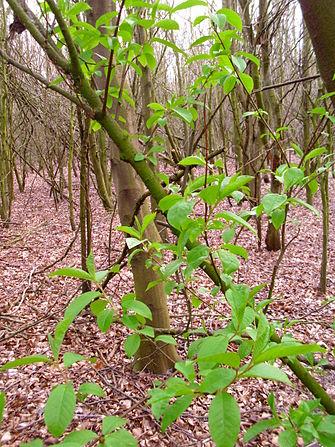 Spring in forest 2.JPG