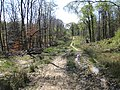Spring in the Forest of Dean - geograph.org.uk - 1266875.jpg