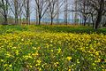 Spring next to Doirani.jpg