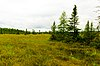 Springstead Muskeg.jpg