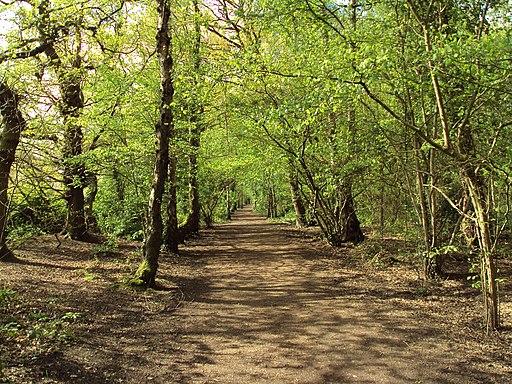 Stanney Woods, Ellesmere Port (1)