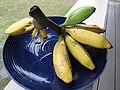 Starr-091112-9622-Musa x paradisiaca-Iholena fruit from Banana Patch LZ-Olinda-Maui (24362887993).jpg