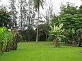 Starr-120606-9530-Musa x paradisiaca-Maoli Maia Manini Koae variegated form-Kahanu Gardens Hana-Maui (24518193233).jpg