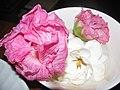 Starr-130313-1733-Hibiscus mutabilis-flower very pink next day-Pali o Waipio Huelo-Maui (25089157772).jpg